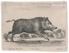 Dzik, przed 1750