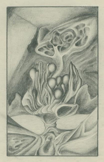 Van Fiut, Hegar, Drzewo balonów