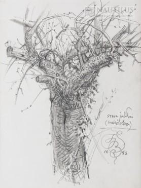 Stara jabłoń (Bukówka), 1993